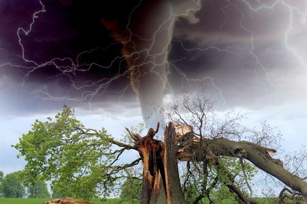 https://pixabay.com/en/tornado-storm-tree-branch-rainstorm-1193184/